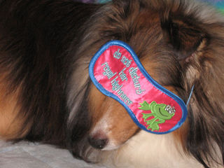 Sleepingsheltie