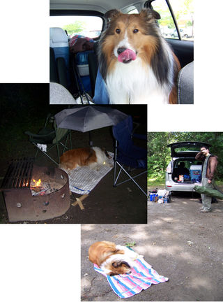 Sheltie Camping