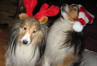 Christmaspupps