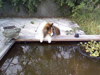 Trevor pond