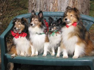 Fourshelties