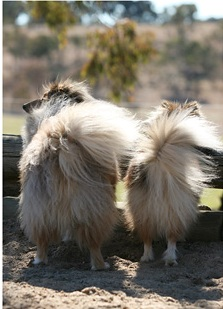 Puppy butts