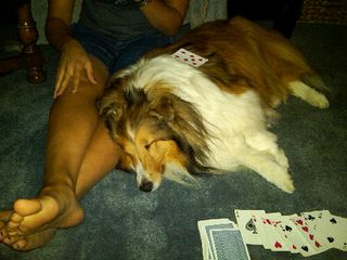 Sheltie Table