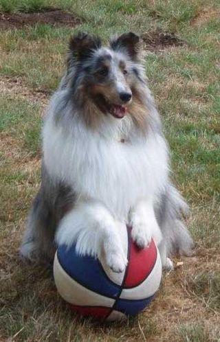 LamorBasketballSit2008