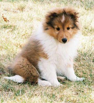 Chloe-puppy