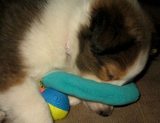 Sleepingwithtoy