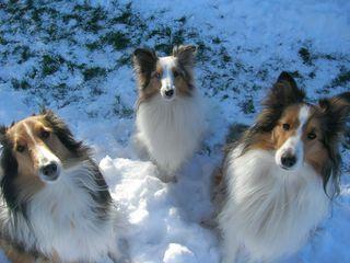 Snowlooks