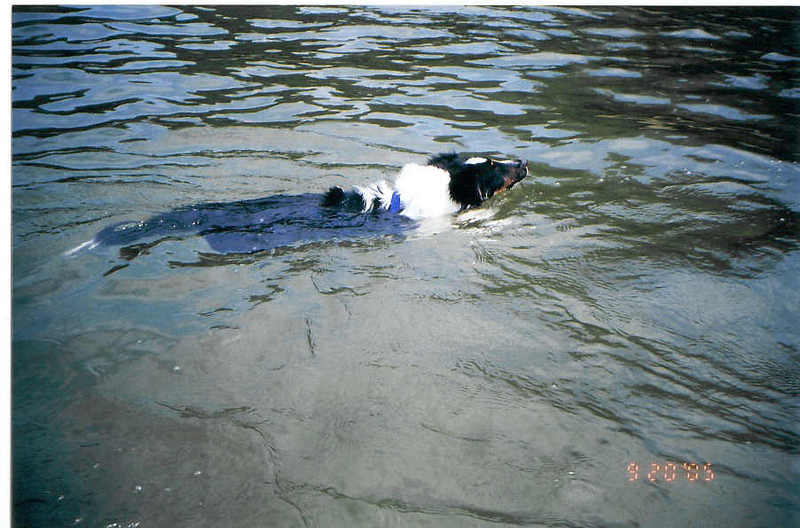 Cubbie_swimming_at_center_hill_lake
