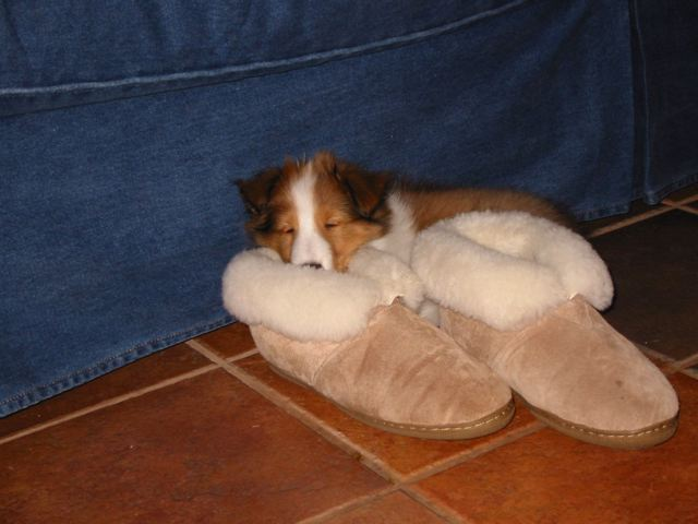 Slipper_warmer