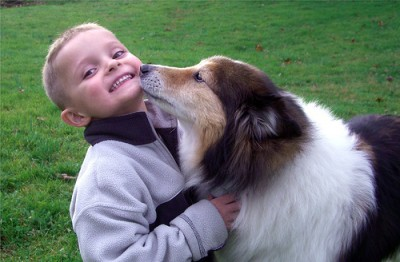Sheltie kissing child