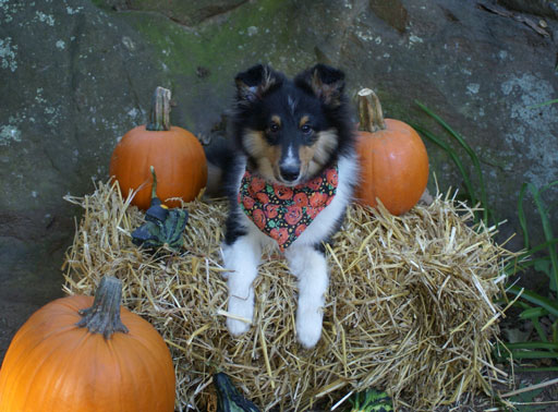 Shadow_fall_harvest