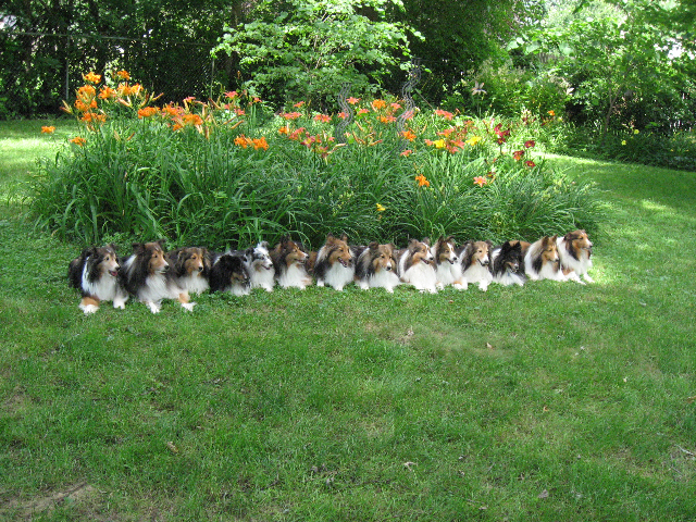 Sheltie nation the cutest garden edging for Borde plastico para jardin
