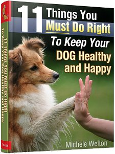 11 Things You Must Do Right To Keep Your Dog Healthy and Happy