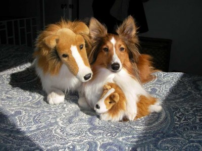 Shetland Sheepdog and Stuffed Toys