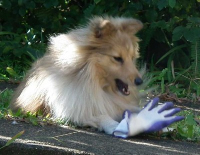 Dog barking at glove
