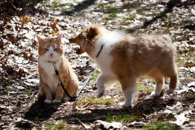 puppy barking at cat