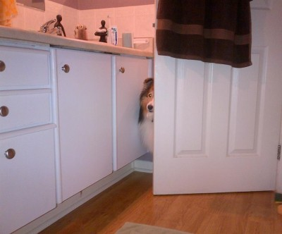 Sheltie opening bathroom door.