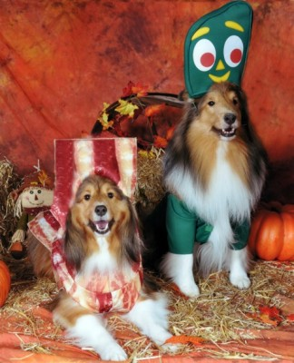 Shelties in costume