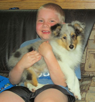 Shetland Sheepdog puppy and boy