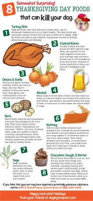Thanksgiving foods that can kill dogs