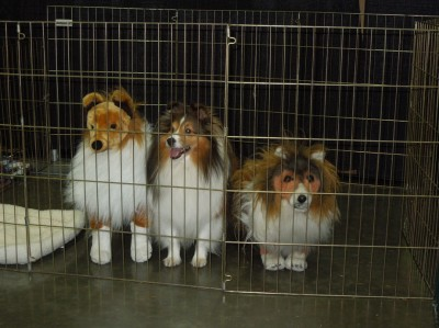 Sheltie Stuffed animals