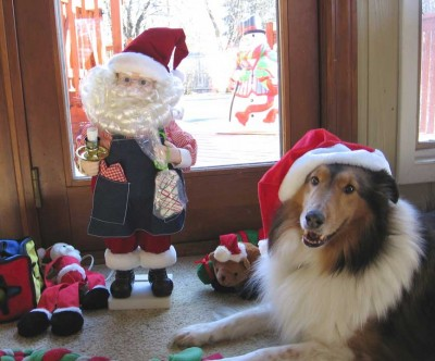 Sheltie and Christmas elf