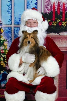 Sheltie in Santa's lap