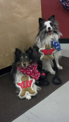 Shelties and gingerbread men