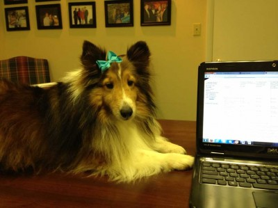 Sheltie and PC