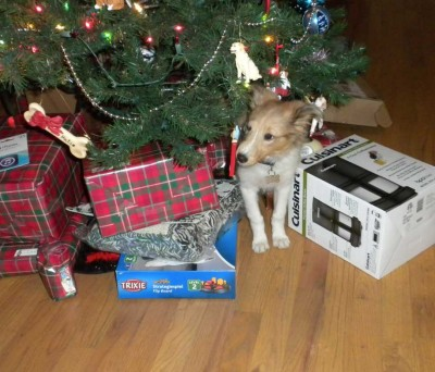 Puppy under Christmas tree