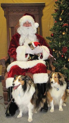 Shelties on Santa's lap