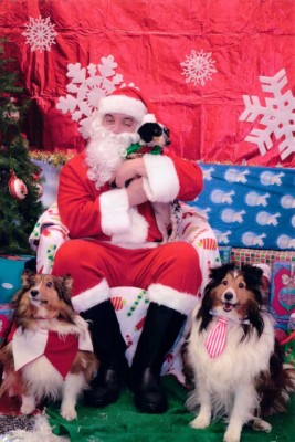 Shelties and Santa