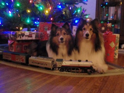 Shelties and toy train