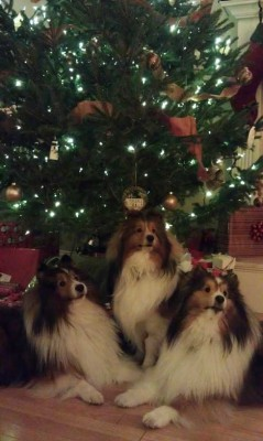 Toby, Teddy and Tyler at Christmas