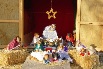 Sheltie Nativity