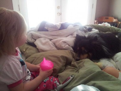 Sheltie and child on bed