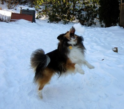 snowleap
