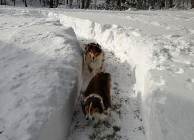 snowslalom