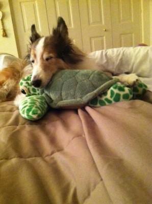 turtlesleep