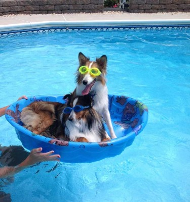 poolshelties