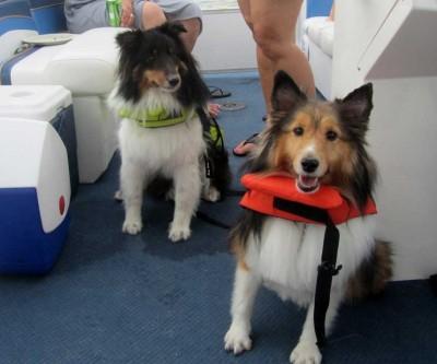 boatdogs
