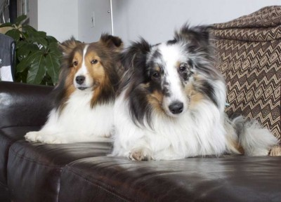 couchshelties