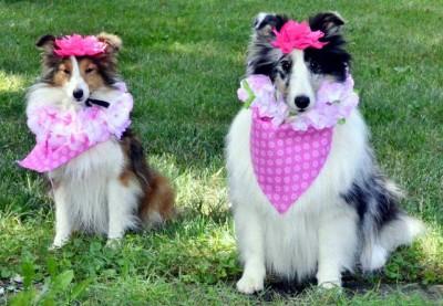 pinkgirls