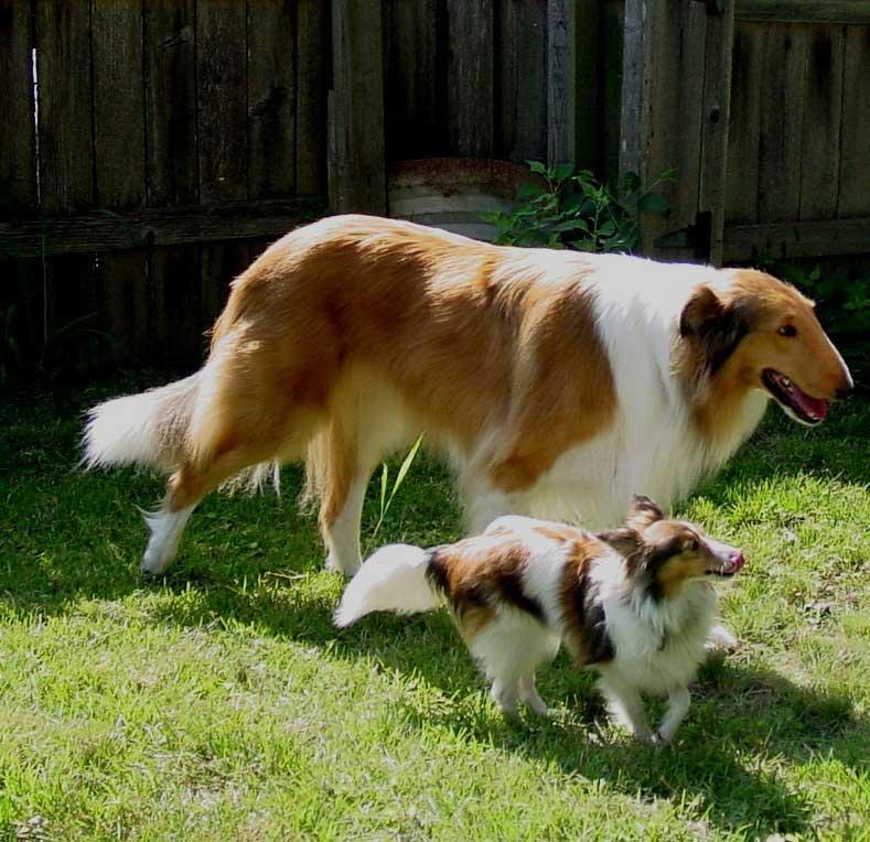 Small Size Dog Rescue