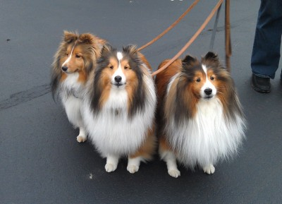my3dogs