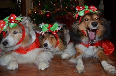 holidaylaughs