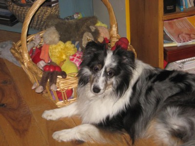 rescue sheltie toys