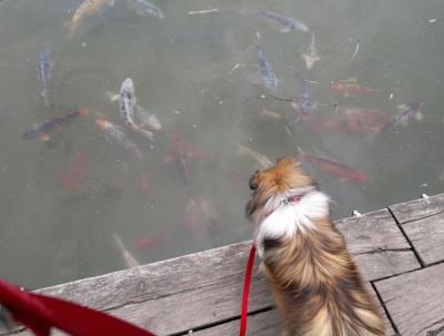 lunaherdfish