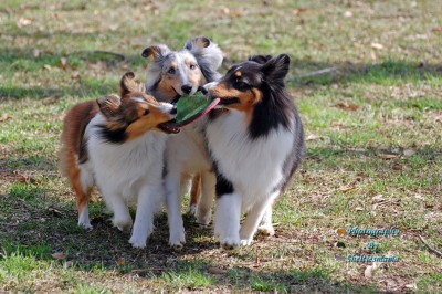 threeshelties