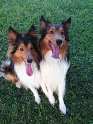 parkshelties